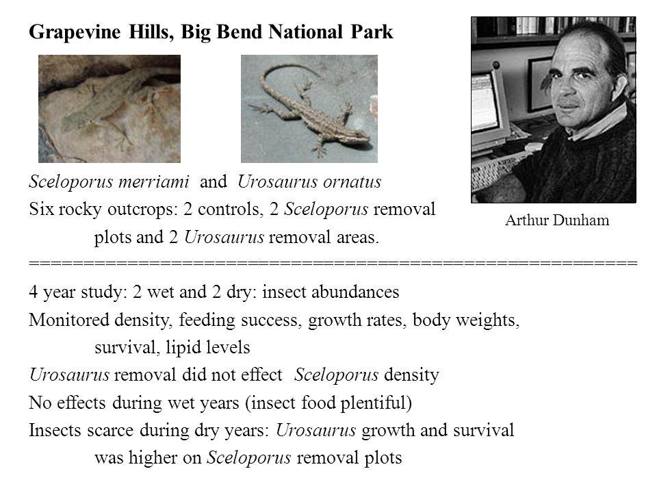 Grapevine Hills, Big Bend National Park Sceloporus merriami and Urosaurus ornatus Six rocky outcrops: 2 controls, 2 Sceloporus removal plots and 2 Uro