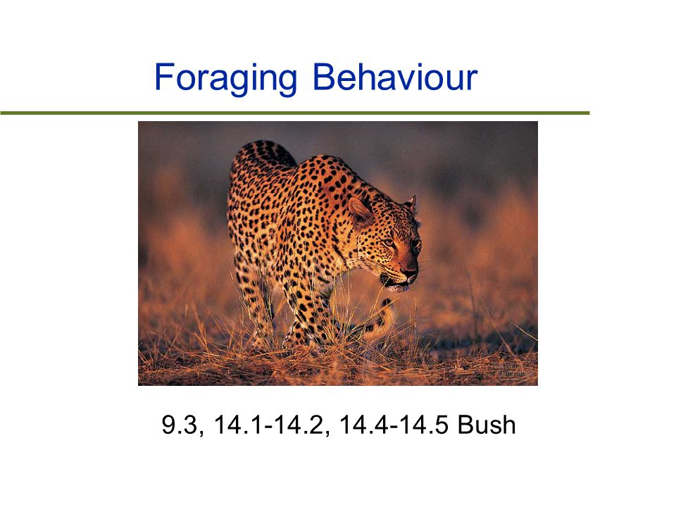 Foraging Behaviour 9.3, 14.1-14.2, 14.4-14.5 Bush