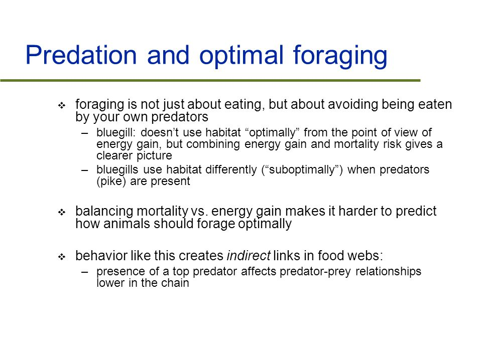 Predation and optimal foraging  foraging is not just about eating, but about avoiding being eaten by your own predators –bluegill: doesn't use habitat optimally from the point of view of energy gain, but combining energy gain and mortality risk gives a clearer picture –bluegills use habitat differently ( suboptimally ) when predators (pike) are present  balancing mortality vs.