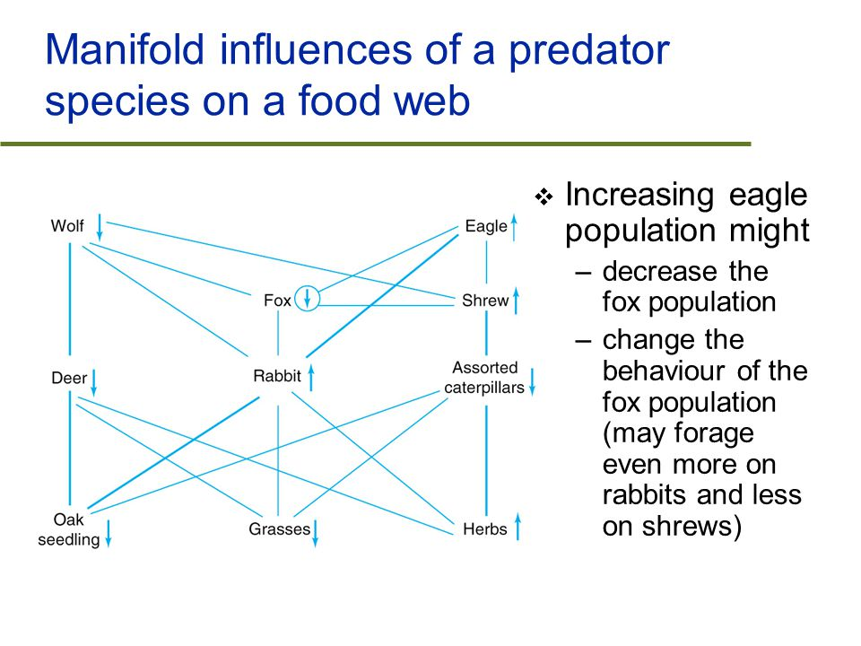 Manifold influences of a predator species on a food web  Increasing eagle population might –decrease the fox population –change the behaviour of the fox population (may forage even more on rabbits and less on shrews)