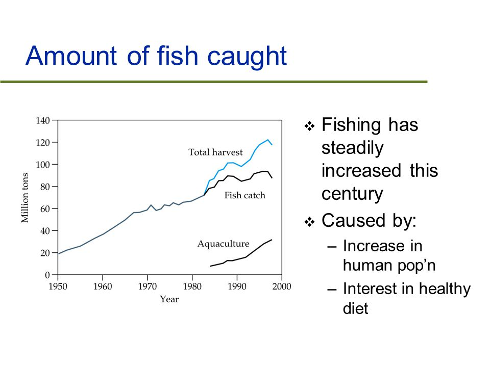 Amount of fish caught  Fishing has steadily increased this century  Caused by: –Increase in human pop'n –Interest in healthy diet