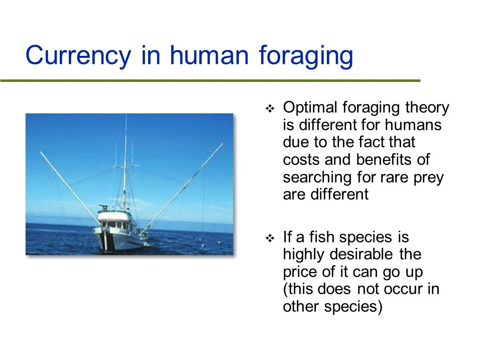 Currency in human foraging  Optimal foraging theory is different for humans due to the fact that costs and benefits of searching for rare prey are different  If a fish species is highly desirable the price of it can go up (this does not occur in other species)