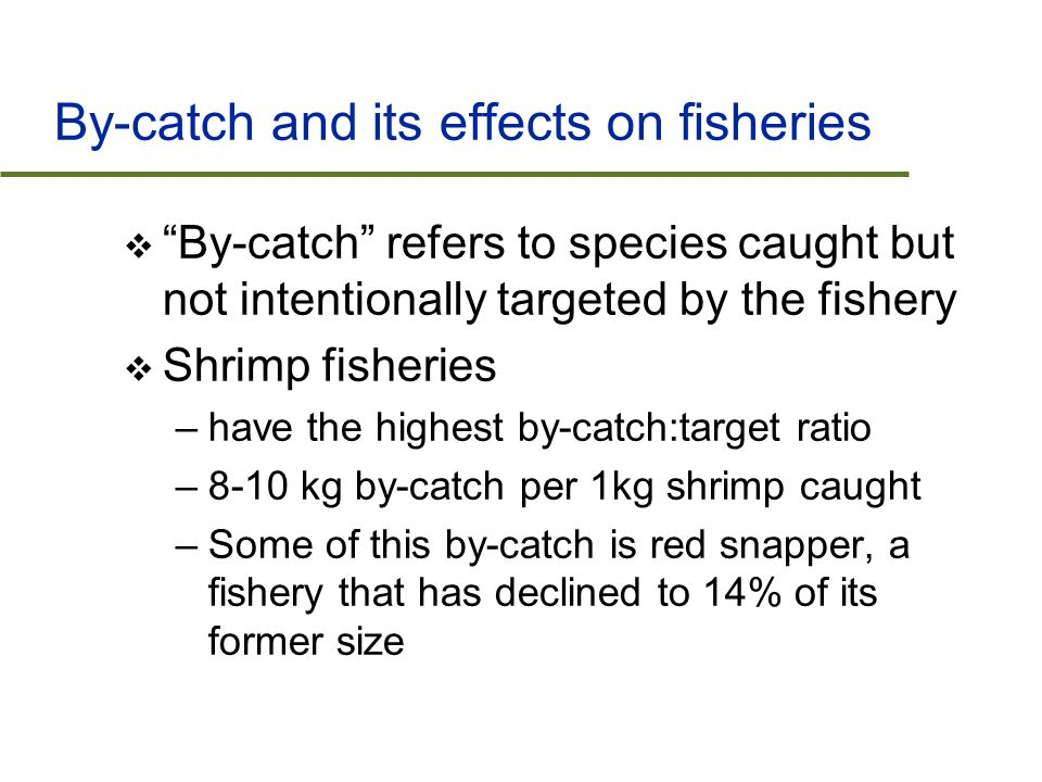 By-catch and its effects on fisheries  By-catch refers to species caught but not intentionally targeted by the fishery  Shrimp fisheries –have the highest by-catch:target ratio –8-10 kg by-catch per 1kg shrimp caught –Some of this by-catch is red snapper, a fishery that has declined to 14% of its former size