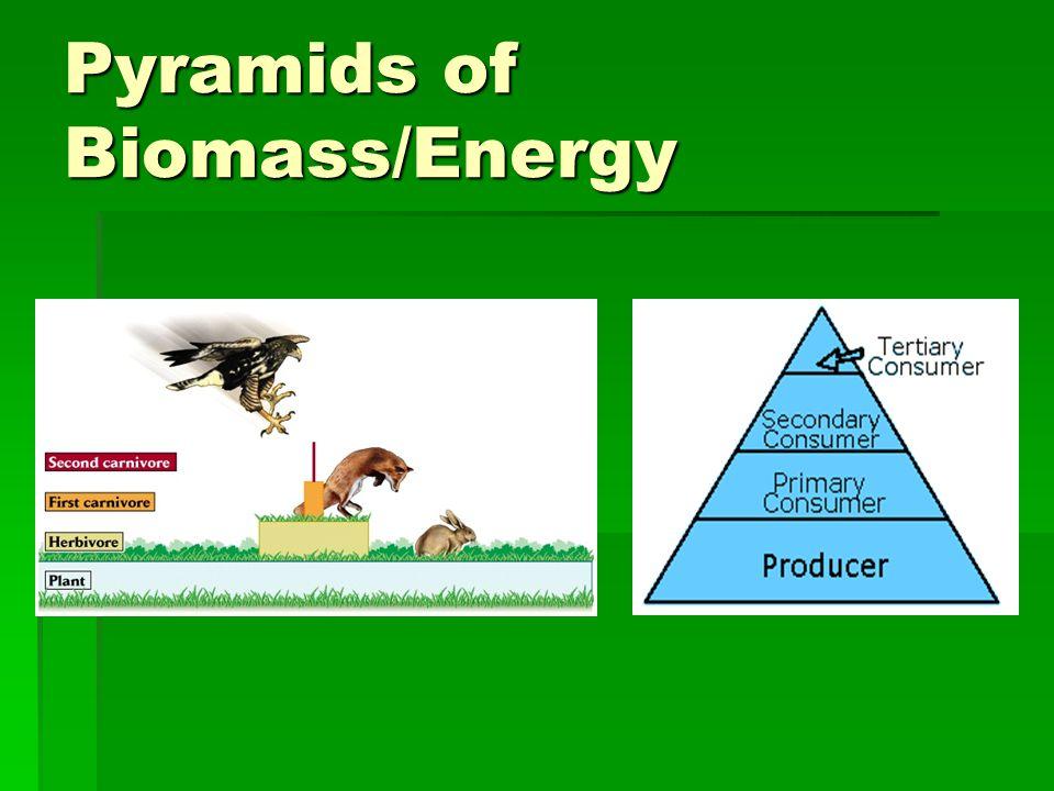 Pyramids of Biomass/Energy