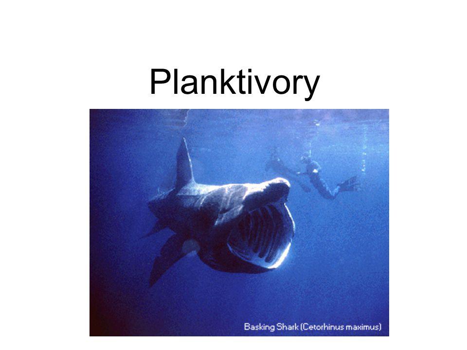 Planktivory