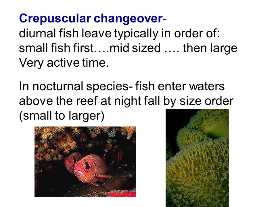 Crepuscular changeover- diurnal fish leave typically in order of: small fish first….mid sized …. then large Very active time. In nocturnal species- fi