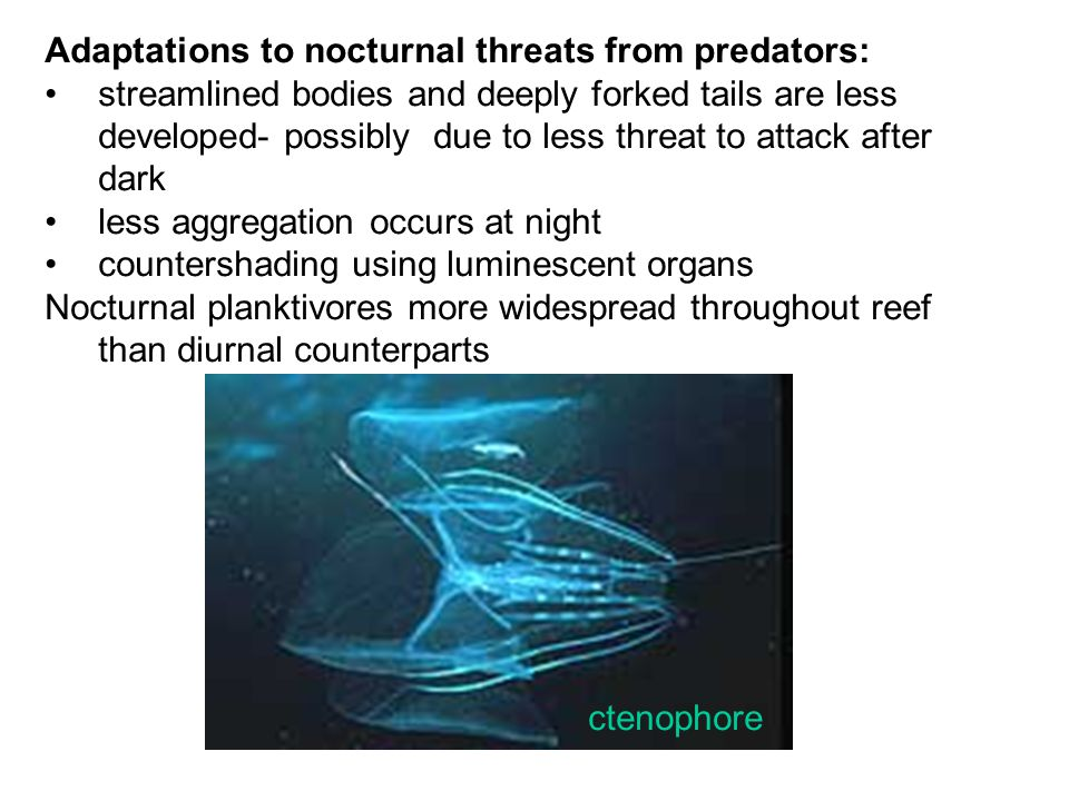 Adaptations to nocturnal threats from predators: streamlined bodies and deeply forked tails are less developed- possibly due to less threat to attack