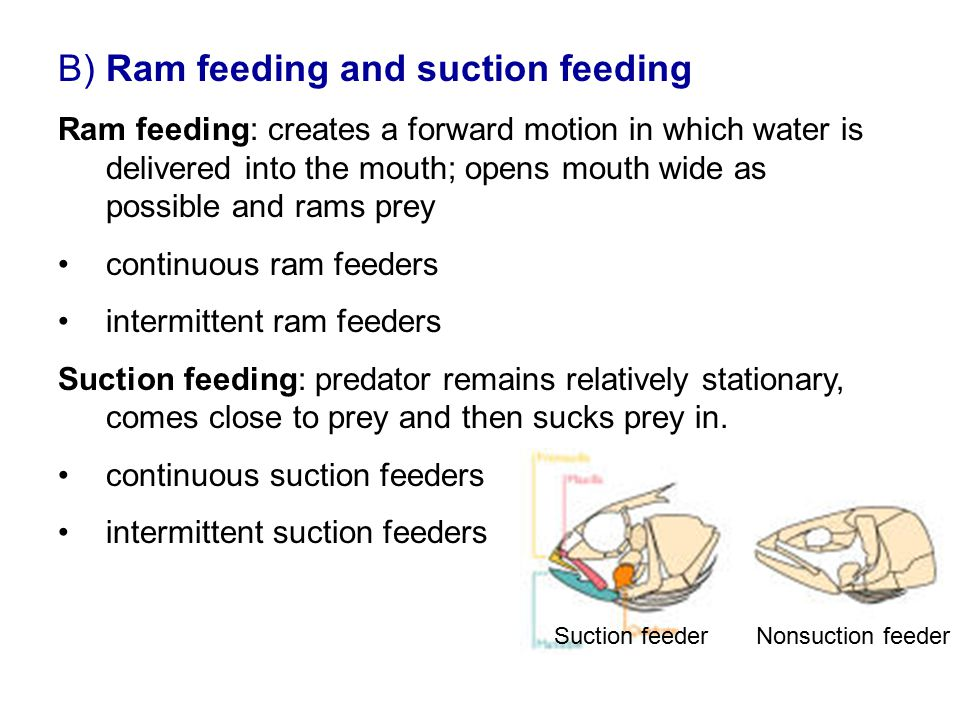 B) Ram feeding and suction feeding Ram feeding: creates a forward motion in which water is delivered into the mouth; opens mouth wide as possible and
