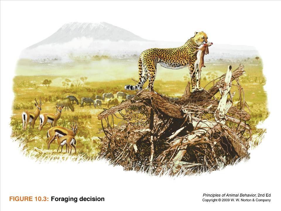 Ayo 2010 Ethology11