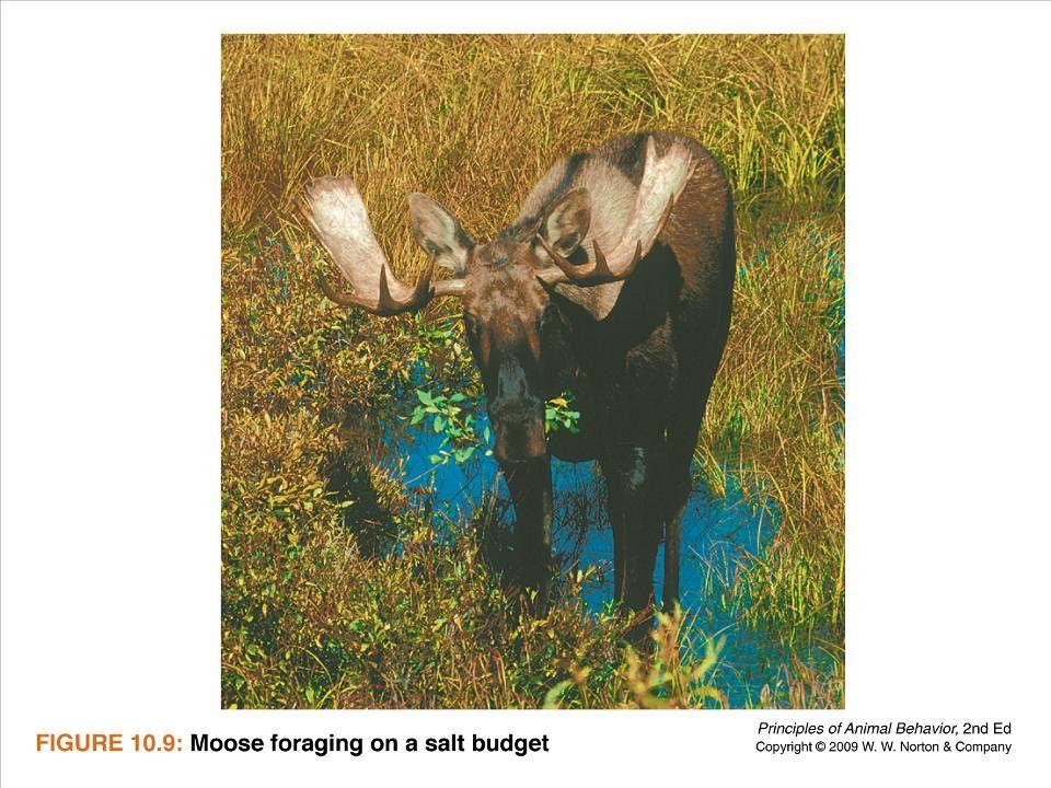 Ayo 2010 Ethology24
