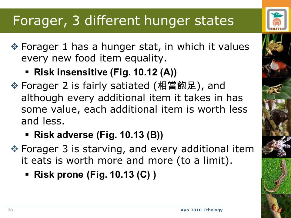 Ayo 2010 Ethology28 Forager, 3 different hunger states  Forager 1 has a hunger stat, in which it values every new food item equality.