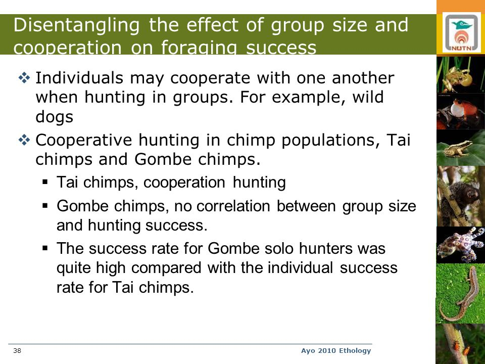 Ayo 2010 Ethology38 Disentangling the effect of group size and cooperation on foraging success  Individuals may cooperate with one another when hunting in groups.