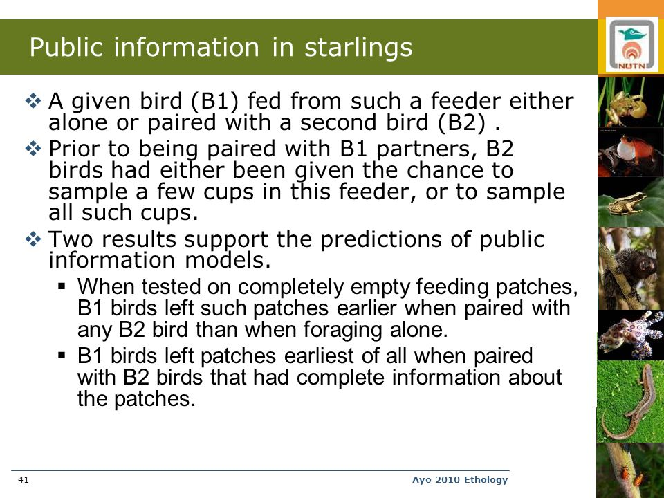Ayo 2010 Ethology41 Public information in starlings  A given bird (B1) fed from such a feeder either alone or paired with a second bird (B2).