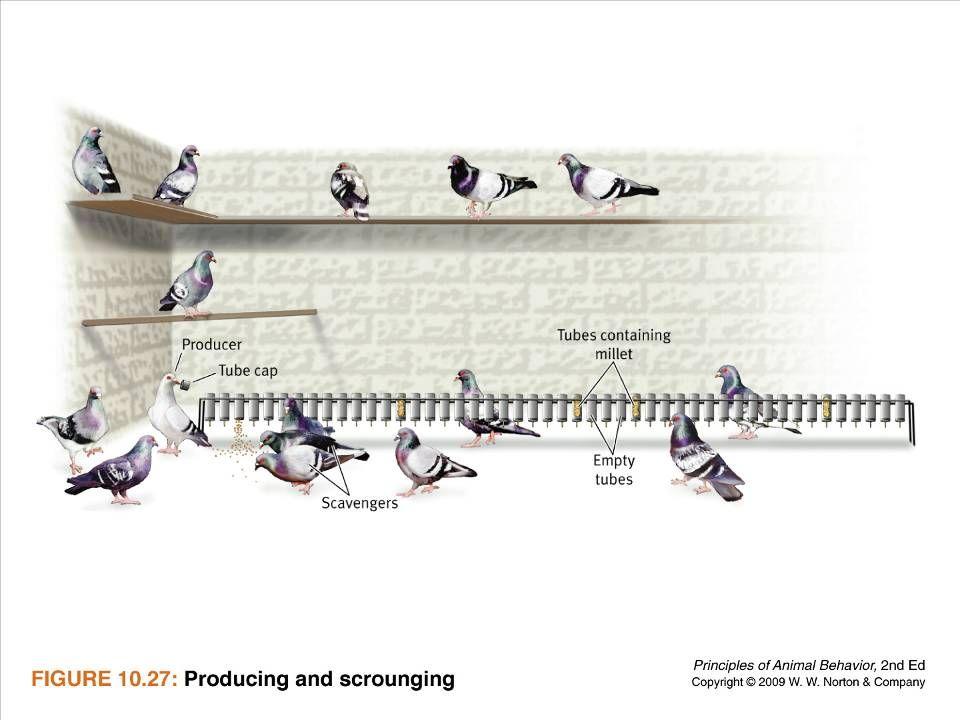 Ayo 2010 Ethology60