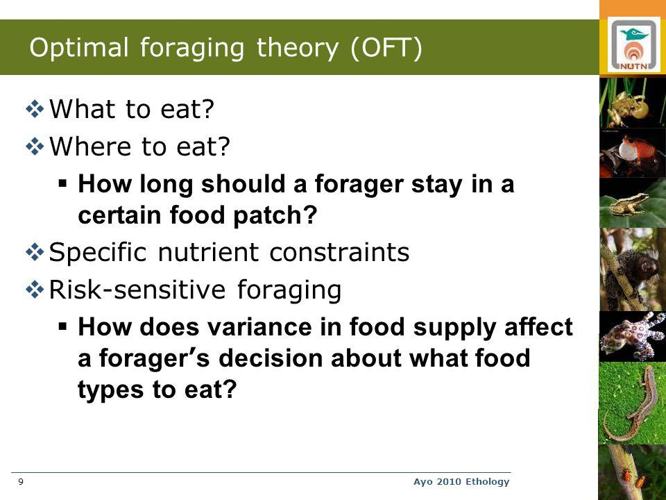 Ayo 2010 Ethology9 Optimal foraging theory (OFT)  What to eat.