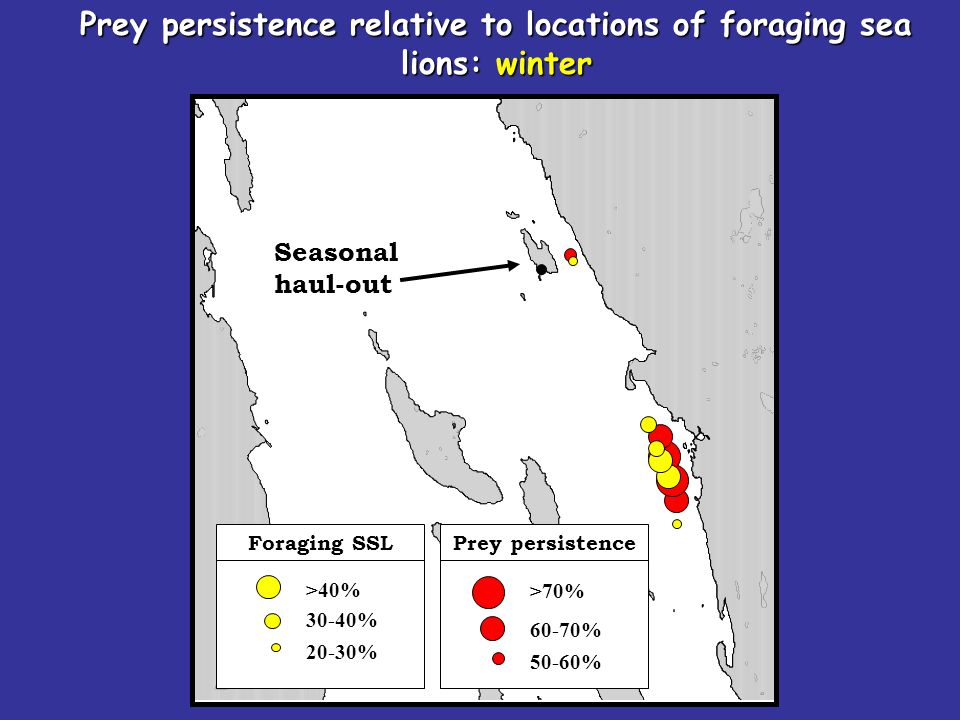Seasonal haul-out Prey persistence relative to locations of foraging sea lions: winter >70% 60-70% 50-60% Prey persistence >40% 30-40% 20-30% Foraging SSL