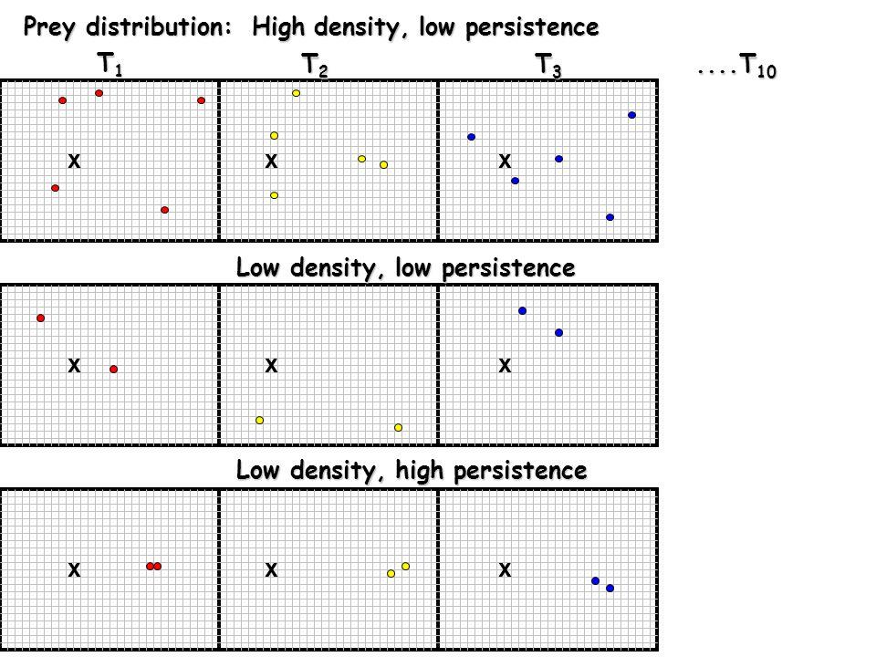xxx T1T1T1T1 T2T2T2T2 T3T3T3T3....T 10 Prey distribution: High density, low persistence xxx Low density, low persistence Low density, low persistence