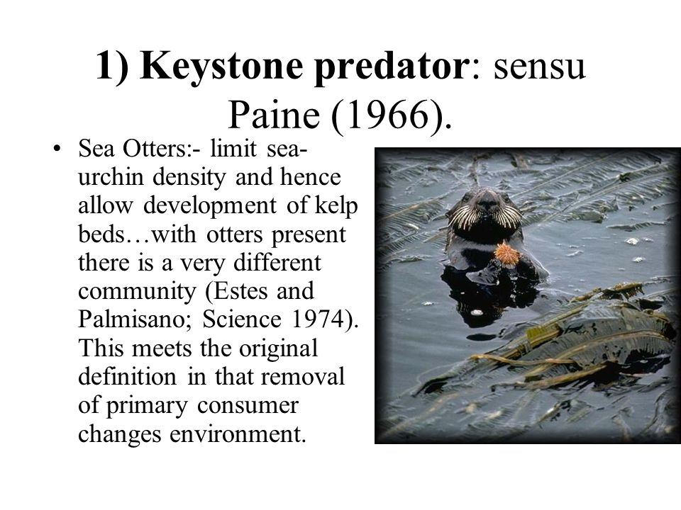 1) Keystone predator: sensu Paine (1966). Sea Otters:- limit sea- urchin density and hence allow development of kelp beds…with otters present there is