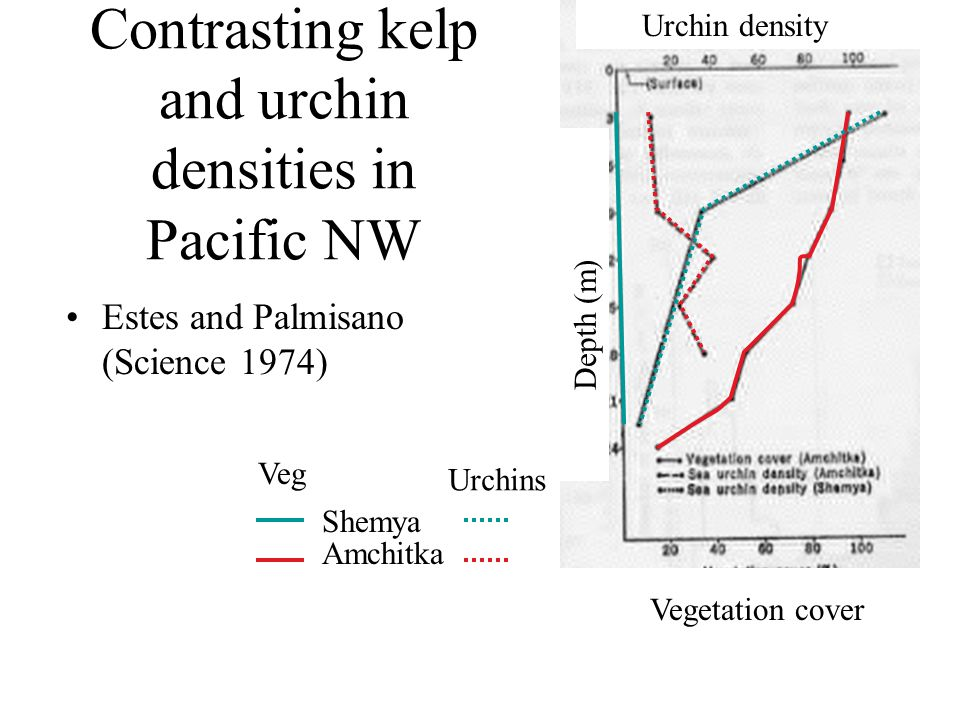 Contrasting kelp and urchin densities in Pacific NW Estes and Palmisano (Science 1974) Vegetation cover Urchin density Depth (m) Amchitka Shemya Veg U