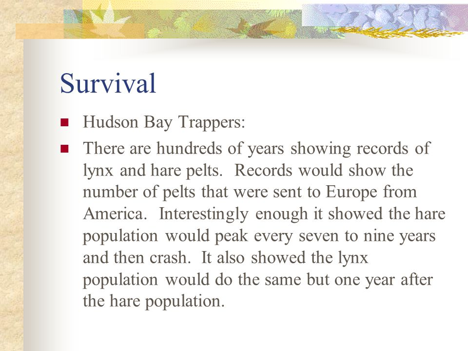 Survival Hudson Bay Trappers: There are hundreds of years showing records of lynx and hare pelts.