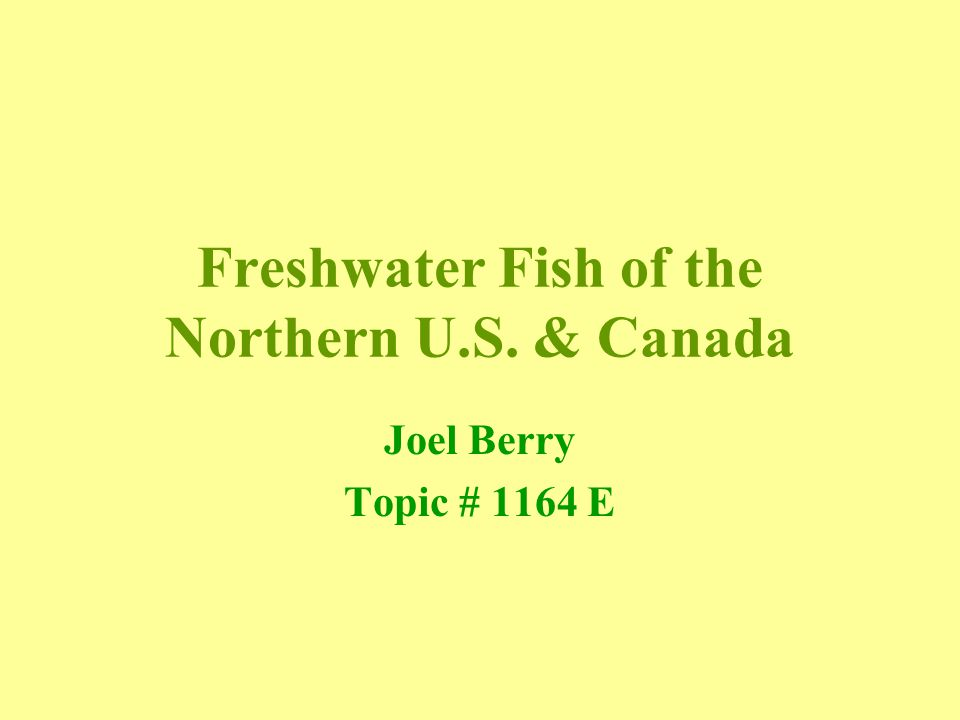 Freshwater Fish of the Northern U.S. & Canada Joel Berry Topic # 1164 E