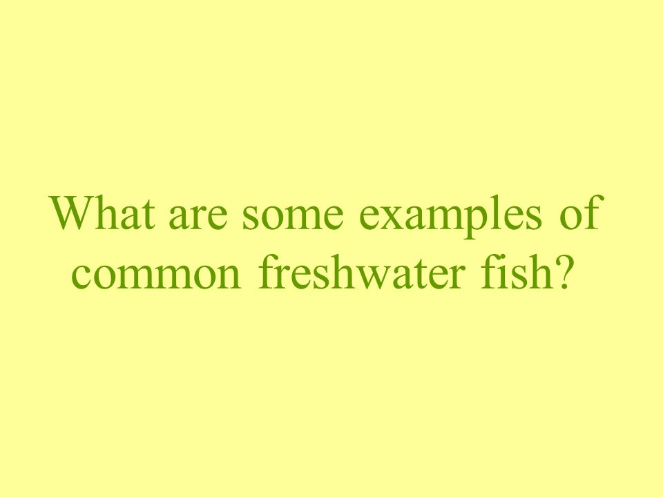 What are some examples of common freshwater fish?