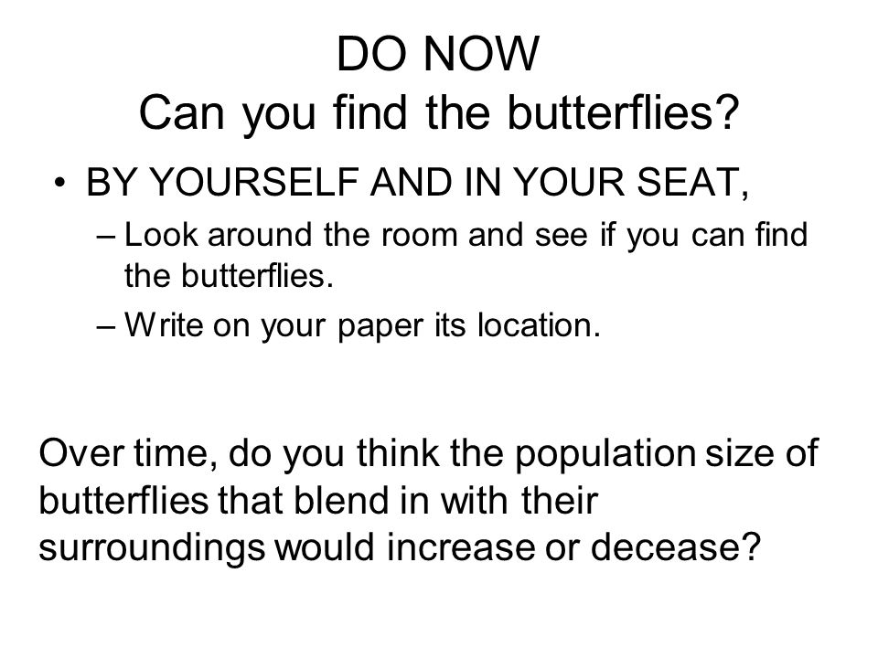 DO NOW Can you find the butterflies.