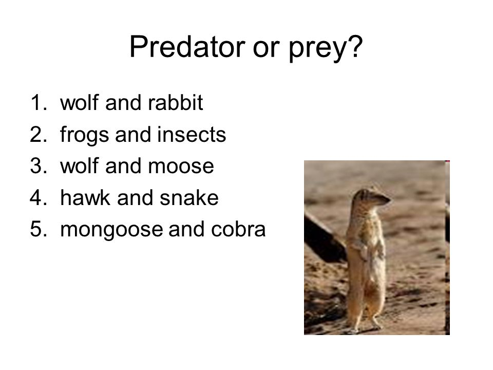 Predator or prey. 1. wolf and rabbit 2. frogs and insects 3.
