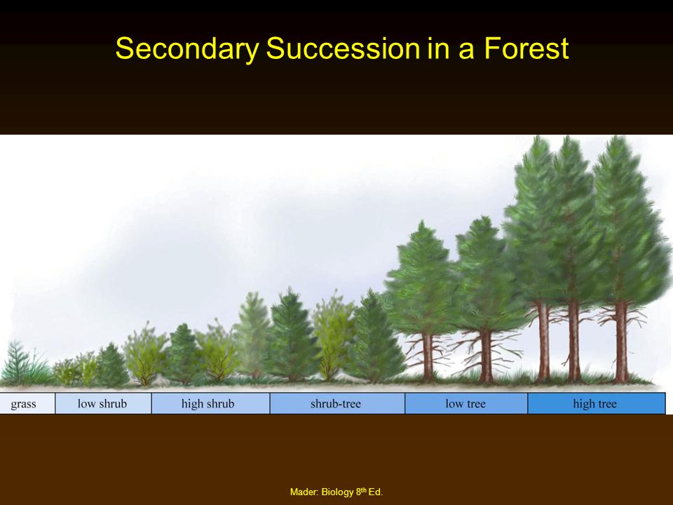 Mader: Biology 8 th Ed. Secondary Succession in a Forest