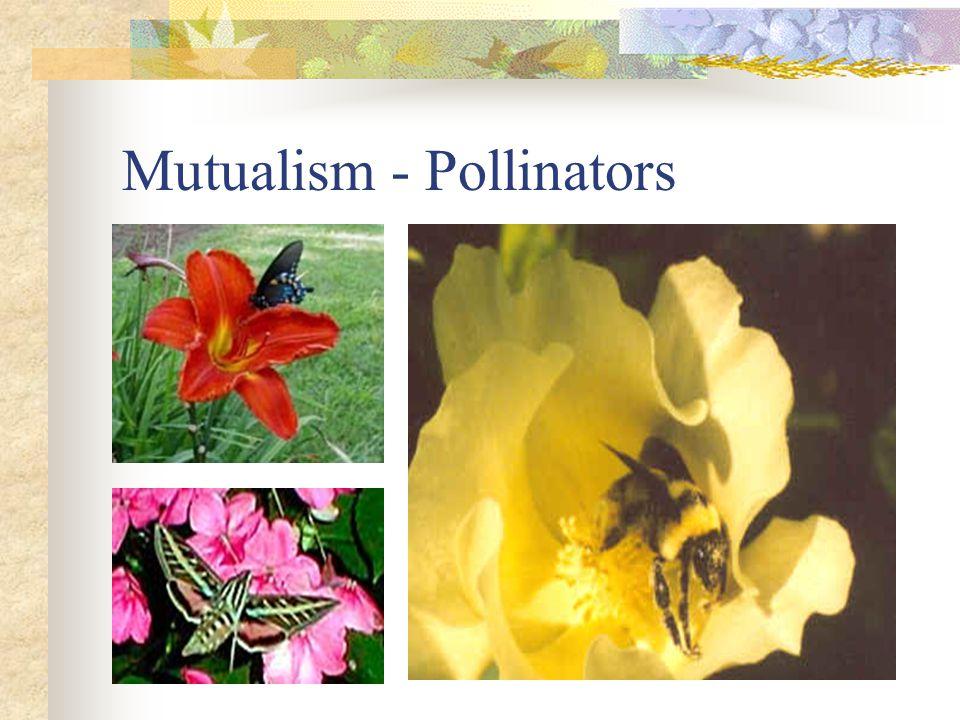 Mutualism - Pollinators