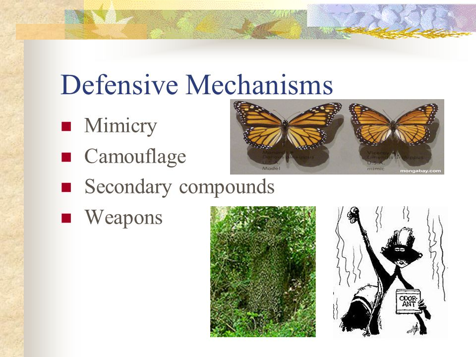 Defensive Mechanisms Mimicry Camouflage Secondary compounds Weapons