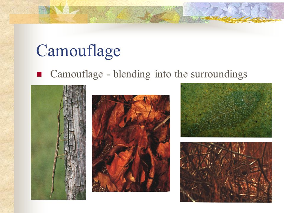 Camouflage Camouflage - blending into the surroundings