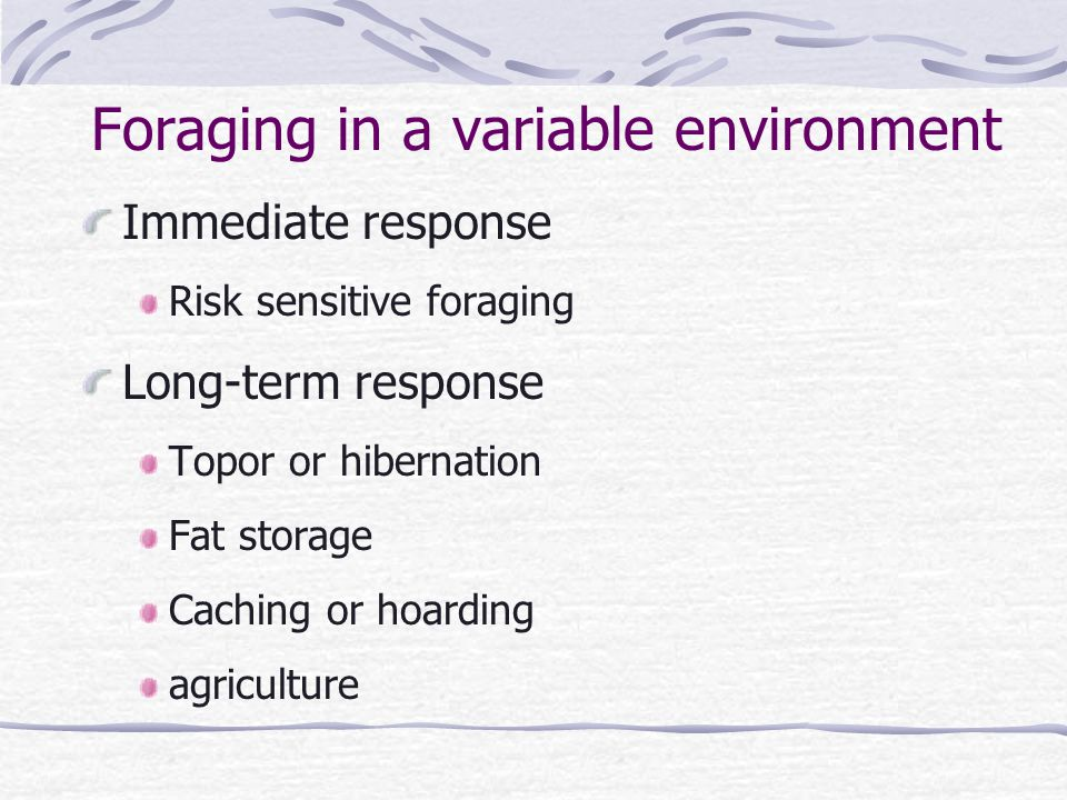 Foraging in a variable environment Immediate response Risk sensitive foraging Long-term response Topor or hibernation Fat storage Caching or hoarding agriculture
