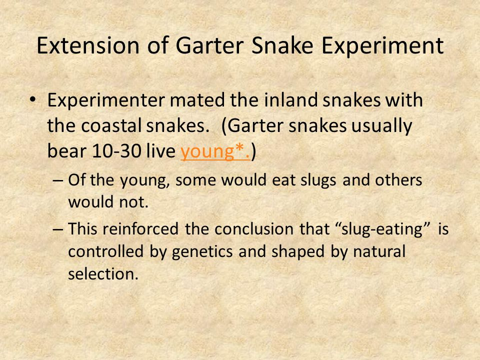 Extension of Garter Snake Experiment Experimenter mated the inland snakes with the coastal snakes.