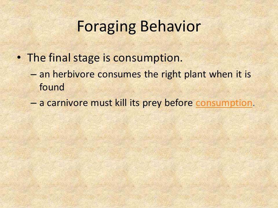 Foraging Behavior The final stage is consumption.
