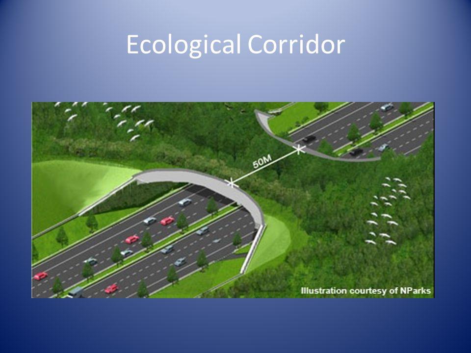 Ecological Corridor