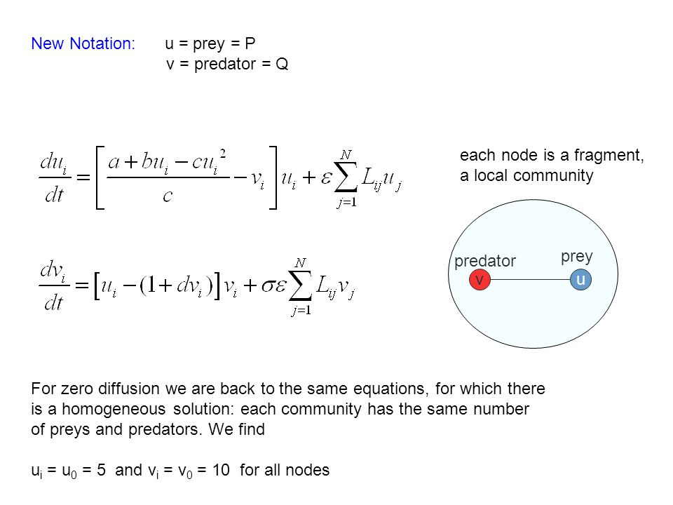 New Notation: u = prey = P v = predator = Q For zero diffusion we are back to the same equations, for which there is a homogeneous solution: each community has the same number of preys and predators.