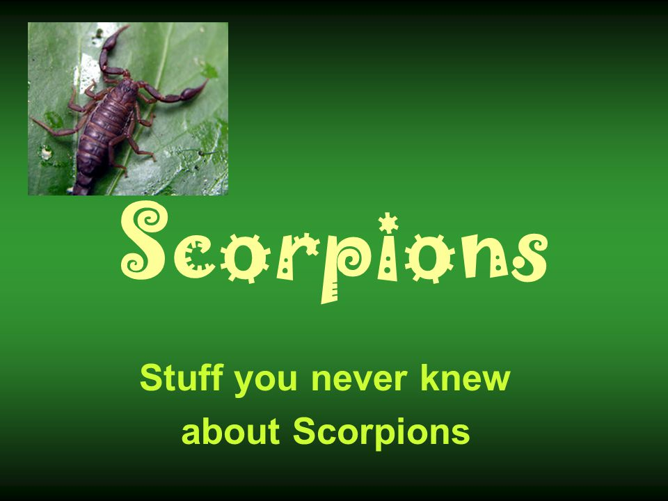 Scorpions Scorpions are the oldest known terrestrial arthropods Fossil scorpions were found in Paleozoic rocks that were 430 million years old (long before the time of the dinosaurs).