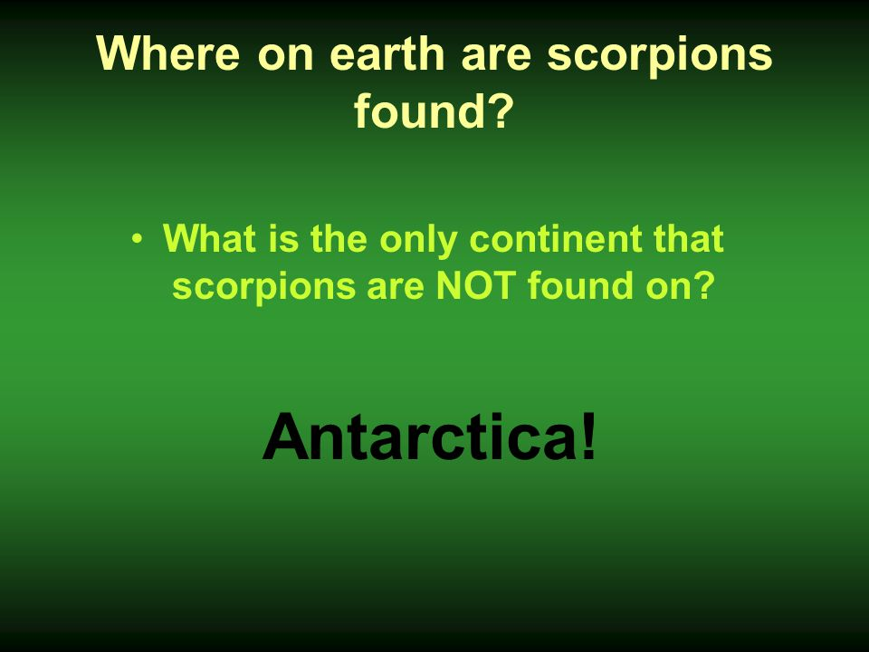 Where on earth are scorpions found? What is the only continent that scorpions are NOT found on? Antarctica!
