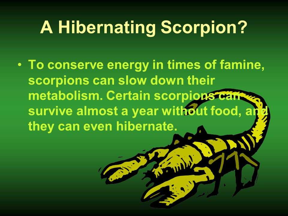 Do Scorpions Drink Water? They get all the water they need from their food. No!