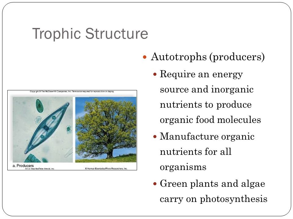 Trophic Structure Heterotrophs (consumers) Need a preformed source of organic nutrients Herbivores Graze directly on plants or algae Carnivores Feed on other animals Omnivores Feed on both plants and animals