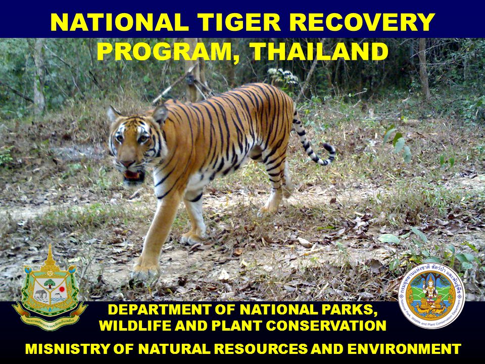 NATIONAL TIGER RECOVERY PROGRAM, THAILAND DEPARTMENT OF NATIONAL PARKS, WILDLIFE AND PLANT CONSERVATION MISNISTRY OF NATURAL RESOURCES AND ENVIRONMENT