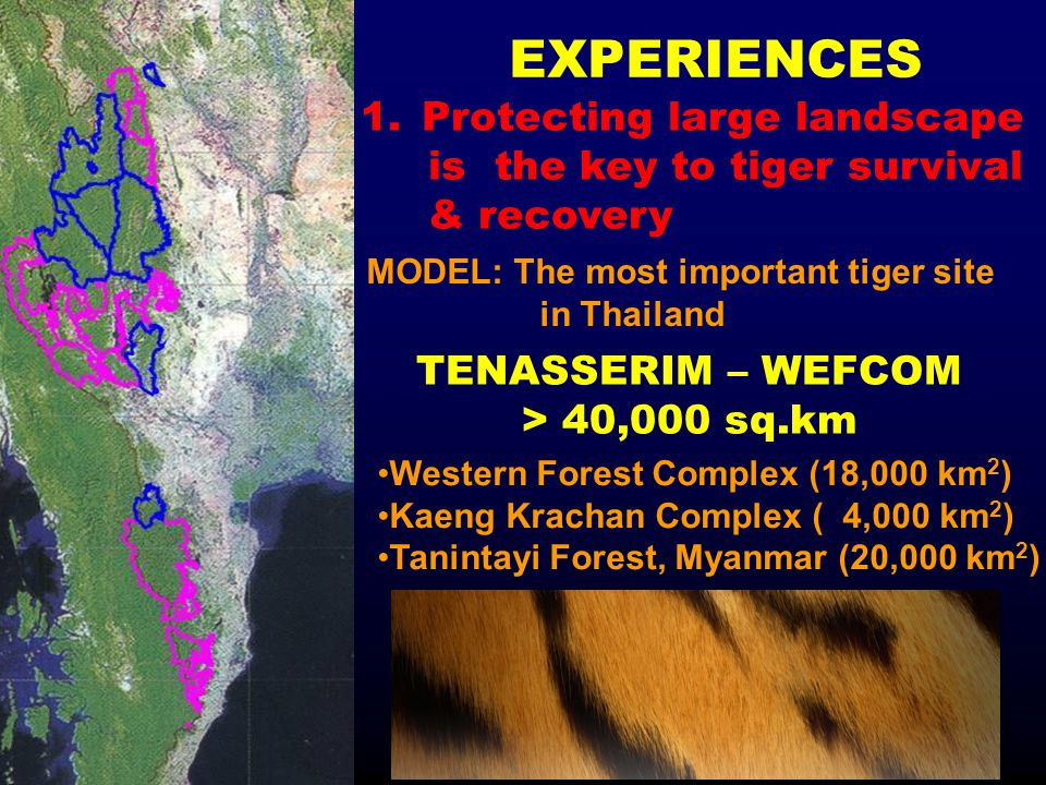 EXPERIENCES 1.Protecting large landscape is the key to tiger survival & recovery MODEL: The most important tiger site in Thailand Western Forest Compl