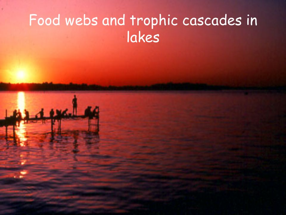 Food webs and trophic cascades in lakes