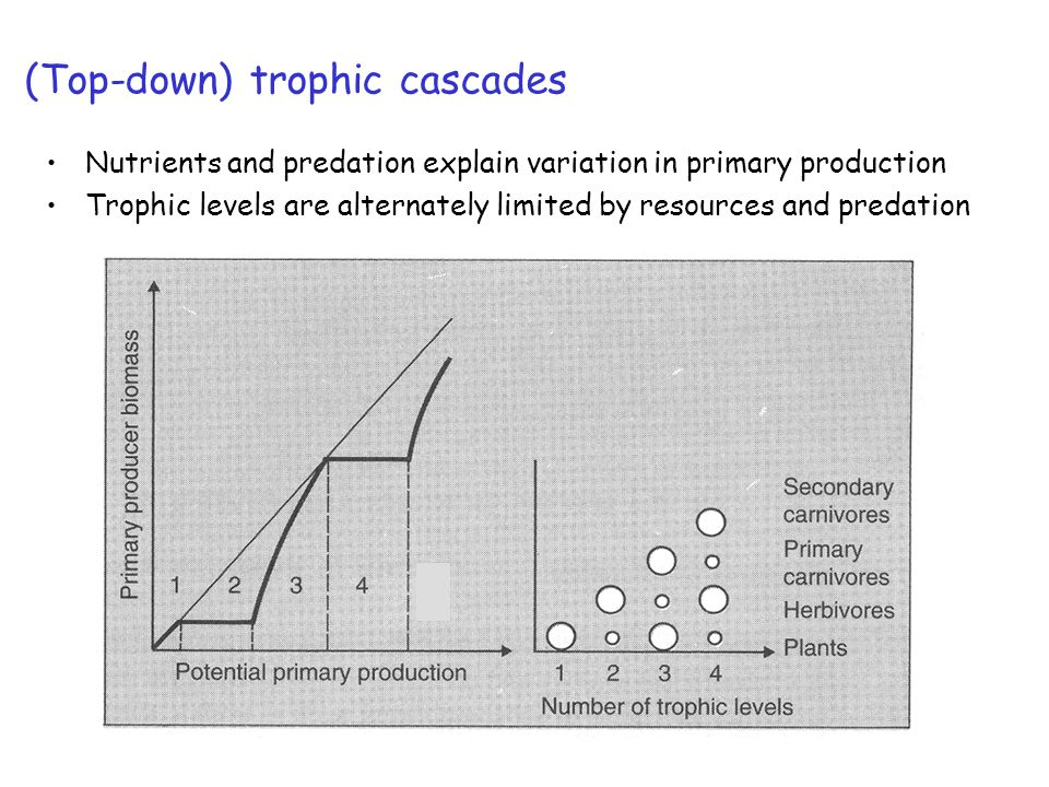 (Top-down) trophic cascades Nutrients and predation explain variation in primary production Trophic levels are alternately limited by resources and predation