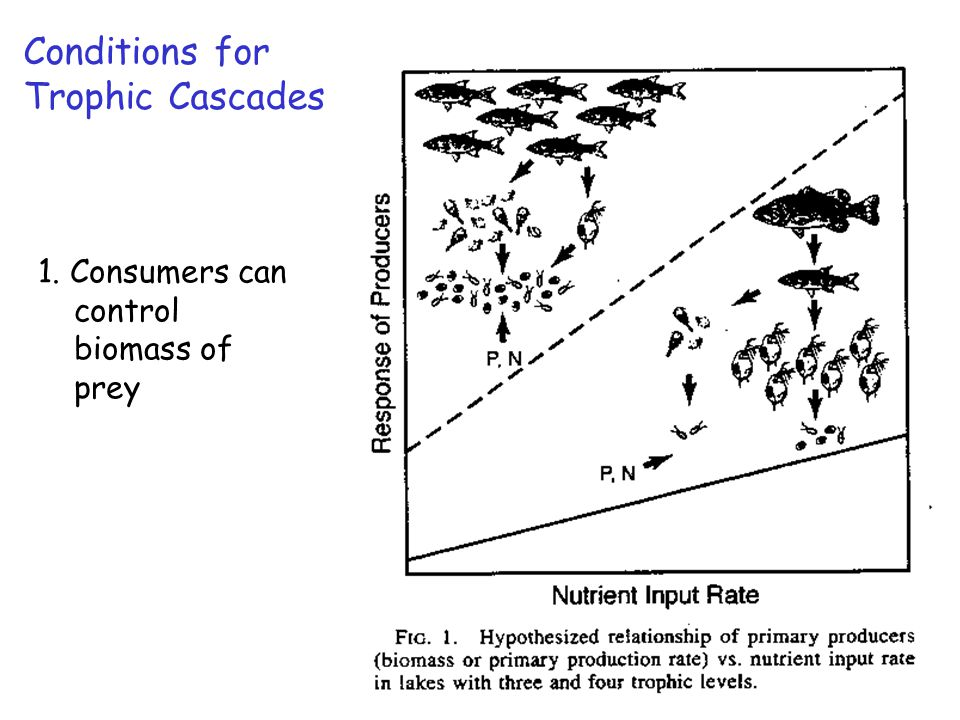 1. Consumers can control biomass of prey Conditions for Trophic Cascades