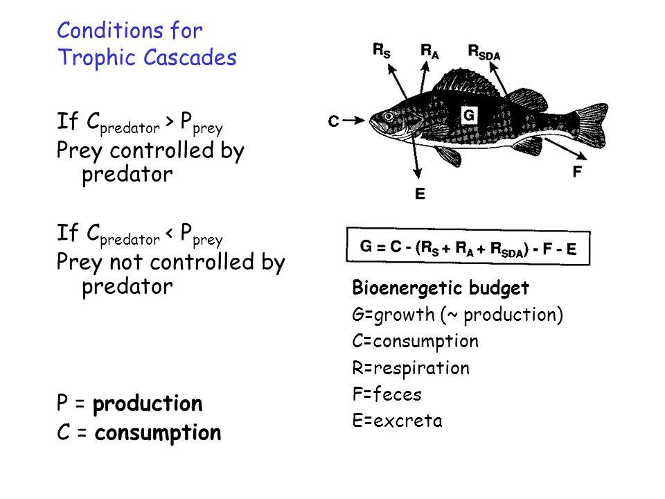 If C predator > P prey Prey controlled by predator If C predator < P prey Prey not controlled by predator P = production C = consumption Bioenergetic budget G=growth (~ production) C=consumption R=respiration F=feces E=excreta