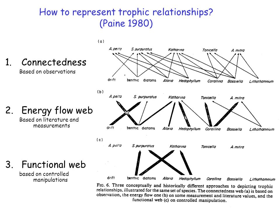 How to represent trophic relationships.