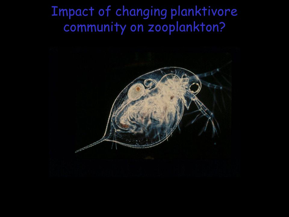 Impact of changing planktivore community on zooplankton