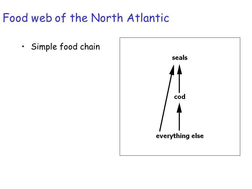 Food web of the North Atlantic Simple food chain